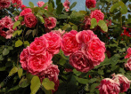 Цветы (1)
